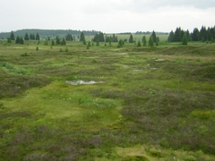 Peat Bog By the Lake